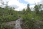 Chemin dans la vallée de Vistas - Laponie