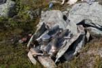Feu de camp - Laponie